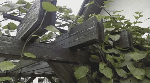 detalj stara pergola