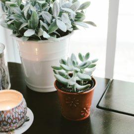 Aktivirajte feng shui obilja z rastlinami v vašem domu